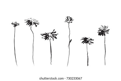 Set of chamomile flowers. Vector image painted by ink. Black hand drawn stylized illustration.