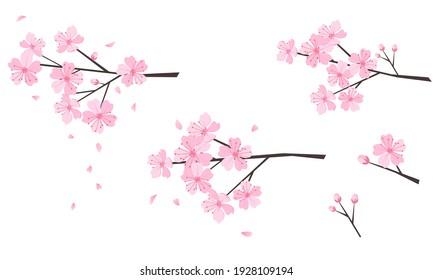Set of Cherry blossom branch on white background vector illustration.