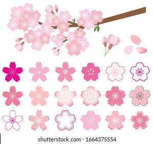 set of cherry blossom illustrations, petal icon