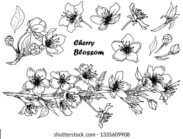Set of cherry blossom. Spring sakura flowers. Hand drawn vector. Isolated elements for design.