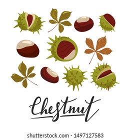 Set of chestnuts, leaves and peels. Design elements for fabric, poster, packaging, banner and wrapping paper. Vector illustration.