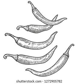 Set of chili pepper illustrations on white background. Design element for poster, card, banner, menu. Vector illustration