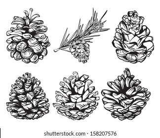 set of christmas hand drawn pine cones