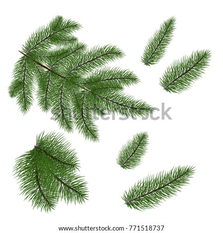 set of christmas tree branches for a christmas decor branches close up vector - Christmas Tree Branches