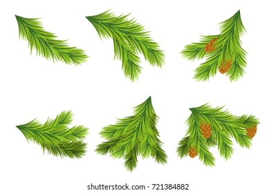 Set of Christmas tree branches for decorations. Vector illustrations on white background. Design elements for Christmas and New Year