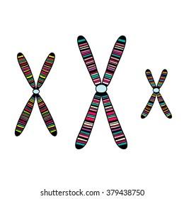 Set of chromosome. Vector illustration.