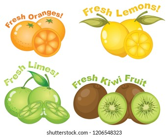 Set of citrus fruits illustration