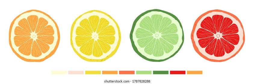 Set of citrus slices of lime, orange, grapefruit and lemon. Vector stock illustration. Textured effect on the skin. The style is hand-drawn and cartoonish. All objects are isolated.