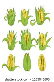 Set of cobs of corn on white background. Can be used for various purposes;