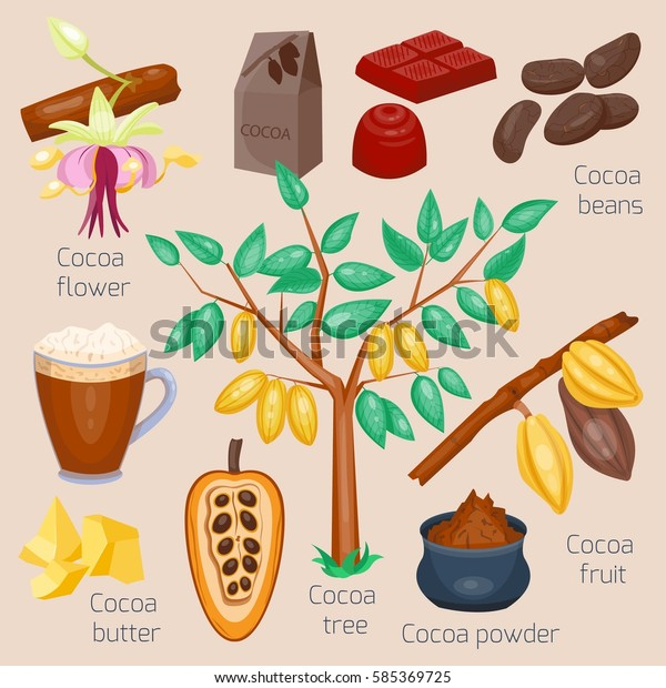 Set Cocoa Chocolate Tree Vector Illustration Stock Vector Royalty Free 585369725