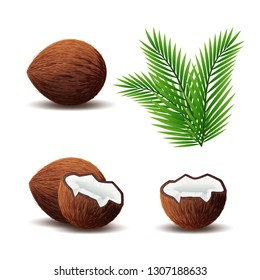 Set of coconut icon, broken coconut and leaf isolated on white background, vector illustration