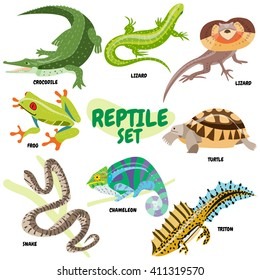 Set of cold-blooded reptiles, a crocodile or alligator, lizard, frill-necked lizard, poisonous frog, turtle, poisonous snake, chameleon, newt. Isolated on white background.