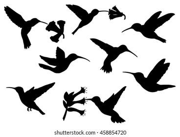 Set of Colibri Silhouettes -  Vector Image