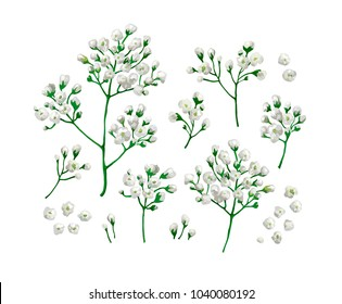 Set / collection of gypsophila flowers in watercolor style isolated on white background. Art vector illustration.