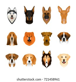 Set, collection of isolated colorful head and face of airedale terrier, beagle, chow, husky, pharaoh hound, saint bernard, labrador, collie, doberman, boxer. Color flat cartoon breed dog portrait.