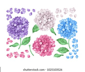 Set / collection of Lilac hydrangea flowers, leaves, petals isolated on white background. Watercolor style. Editable elements. Botanical vector illustration.