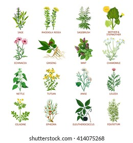 Set of color flat icons healing herbs with name using in medicinal practice and phytotherapy vector illustration