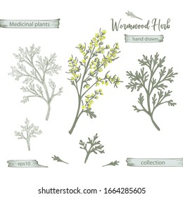 Set color hand drawn of wormwood, lives and flowers isolated on white background. Retro vintage graphic design. Botanical sketch drawing, engraving style. Vector illustration.