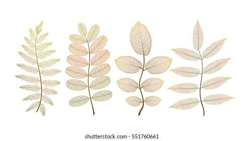 Set colored autumn leaves on white. Vector illustration. EPS 10.