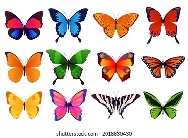 Set of colored, beautiful butterflies. Vector illustration
