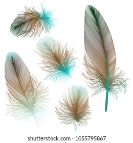 Set colored feathers. Vector illustration.