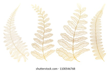 Set colored  fern leaves. Vector illustration. EPS 10