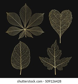 Set colored gold leaves. Vector illustration. EPS 10.