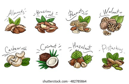 Set of colored illustration of nuts. For menus, greeting cards and packaging.