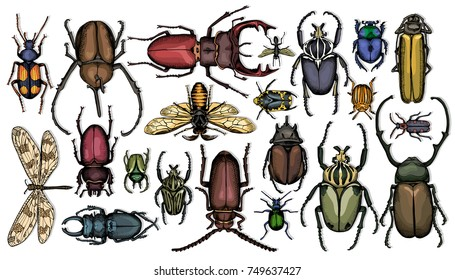 Set of colored insects. Vector illustration.