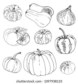 Set of colored vegetables. Fresh food. Pumpkins line drawn on a white background. Vector illustration.