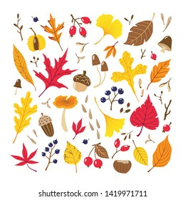 Set of colorful autumn leaves, berries, seeds and mushrooms isolated on white background.