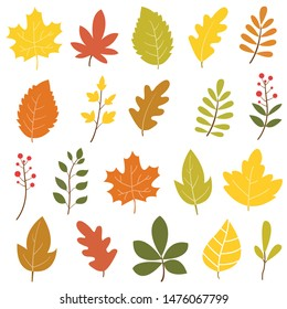 Set of colorful autumn leaves and berries. Isolated on white background. Simple design. Flat style vector illustration.