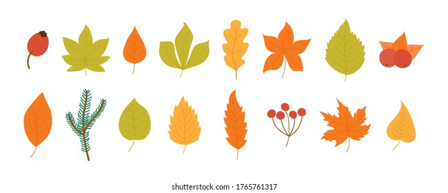 Set of colorful autumn leaves and berries isolated on white background. Yellow autumnal garden leaf, red fall leaf and fallen dry leaves. Simple cartoon flat style, vector illustration, eps 10.