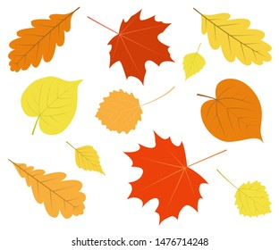 Set of colorful autumn leaves isolated on white background. Vector elements.