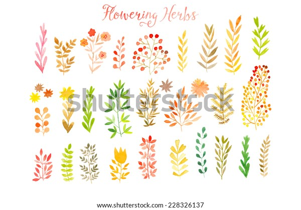 Set of colorful autumn leaves. Vector illustration.vector set of red autumn watercolor leaves and berries, hand drawn design elements