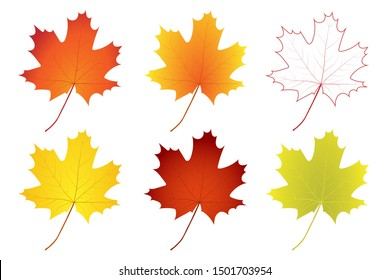 Set of colorful autumn maple leaves. Vector illustration.