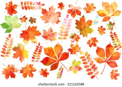 Set of colorful autumn watercolor leaves: maple leaves, mountain ash leaves, chestnut leaves. Vector illustration.