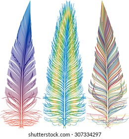 Set of colorful feathers of different shapes. Vector illustration