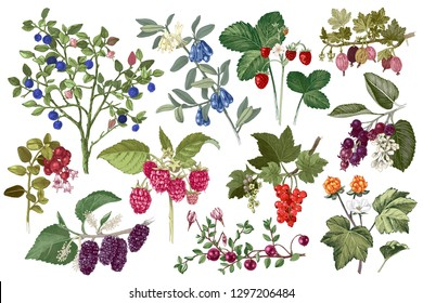 Set of colorful hand drawn berries branches. Plants with ripe berries and flowers. Vector illustration