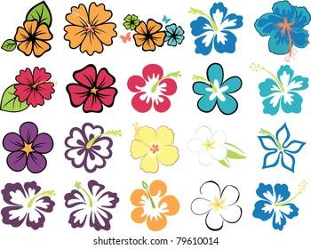 set of colorful hibiscuses and plumeria
