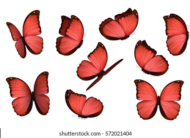 Set colorful isolated butterflies. View Insects  Morpho amathonte Vector illustration