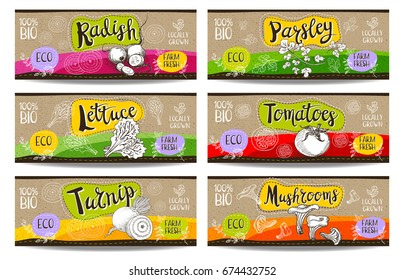 Set of colorful labels sketch style food spices cardboard texture horizontal. Radish, parsley, tomatoes, lettuce, turnip, mushrooms. Vegetables farm fresh locally grown. Hand drawn vector illustration