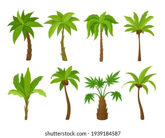 Set of colorful palm tree vector flat illustration. Collection of cartoon tropical plants with green leaves top and trunks isolated on white. Bundle of fresh natural coconut wood cultivated gardening