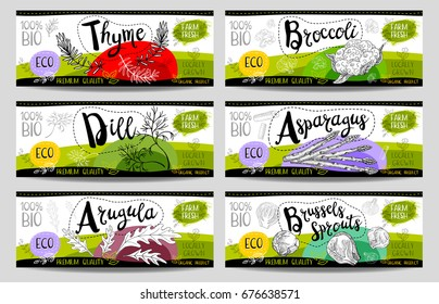 Set of colorful stickers sketch style food spices white horizontal. Asparagus brussels sprouts broccoli thyme arugula dill. Vegetables farm fresh locally grown  Hand drawn vector illustration