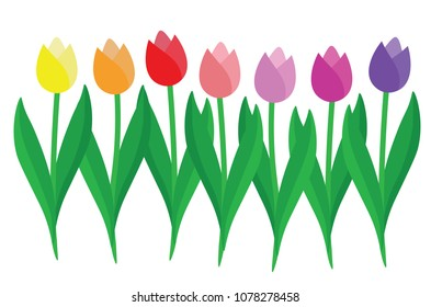 Set of colorful Tulips isolated on white