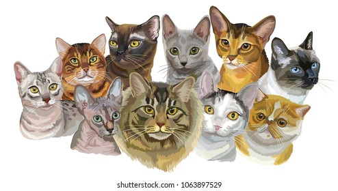 Set of colorful vector portraits of cats  breeds Exotic Shorthair, Bengal , Burmese, Egyptian Mau, Maine Coon, Russian Blue, Sphynx , Thai cats isolated on white background