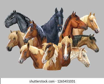 Set of colorful vector portraits of different horses breeds (Russian Heavy Draft Horse; Byelorussian Harness Horse; Friesian horse, Welsh pony) isolated on grey background