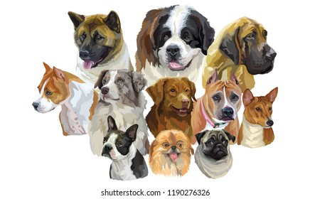 Set of colorful vector portraits of dog breeds Pekingese, Pitbull, Basenji, Boston terrier, Australian shepherd, Great Dane, American akita, Pug isolated on white background