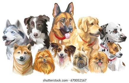 在白色背景上隔离狗品种的彩色矢量肖像集