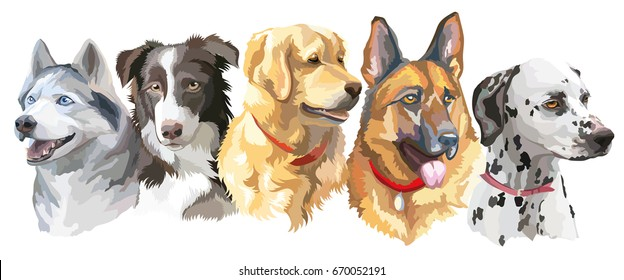 Set of colorful vector portraits of dog breeds isolated on white background
